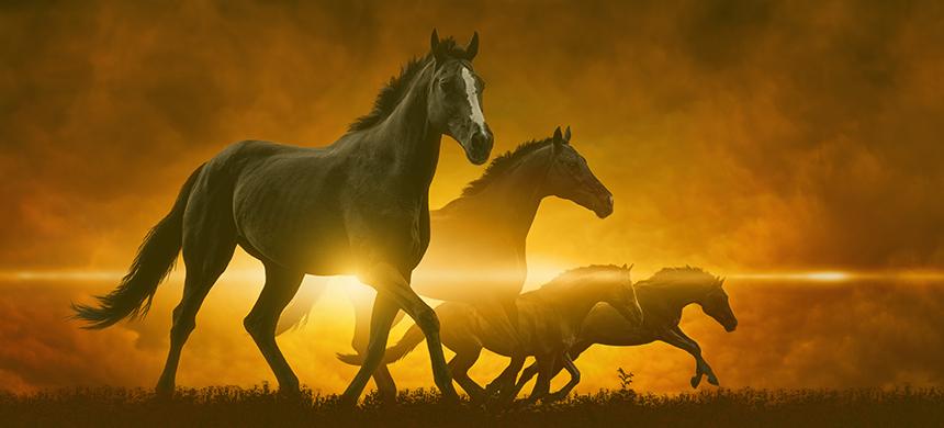 Jinetes del Apocalipsis: el caballo amarillo