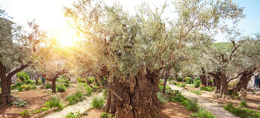 Lugares de la Biblia: el Monte de los Olivos
