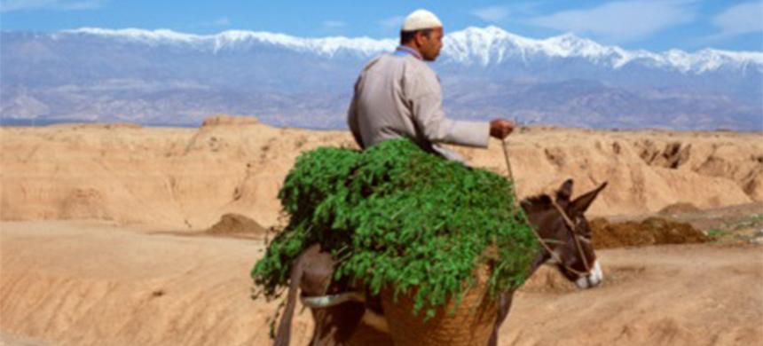 Costumbres de la Biblia: El uso del burro