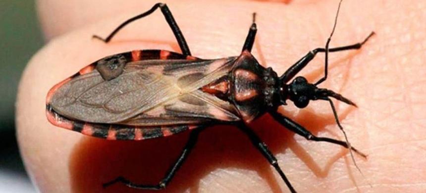 ¿Qué es la enfermedad de Chagas y por qué tiene un día internacional?