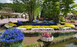 A public garden with brightly coloured flowers and plants set around a water feature. Universal design and gardens.