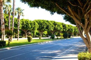 A line of street trees line the roadway.