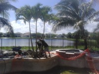 Christmas palm installed for new swimming pool landscape ...