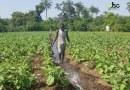Boké: des jeunes épousent la pratique de la culture maraîchère