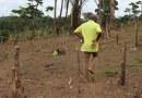 Covid-19/: les réseaux sociaux mis à contribution pour écouler les produits en Guinée Forestière
