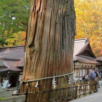 Ancient cedars - Togakushi Shinto shrines - Nagano
