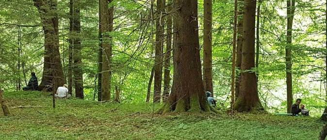 ForestMeditationOPT