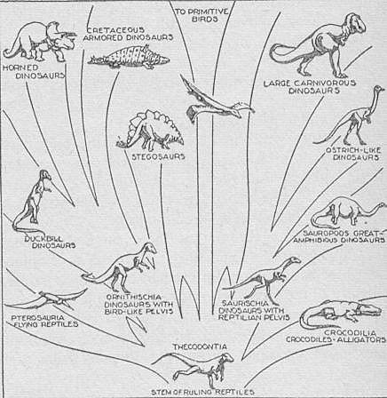kondratiylnidyp: pictures of dinosaurs to colour in