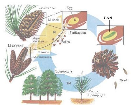 Plant Taxonomy BIOLOGY JUNCTION