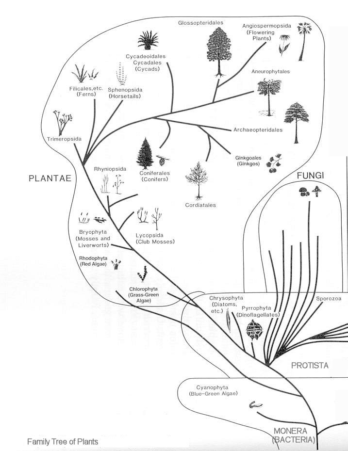 Evolution of Micro-organisms and Plants