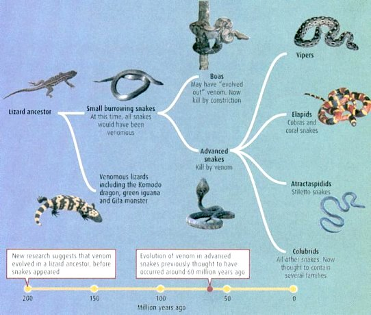 lost timeline diagram minecraft sphere age of animals