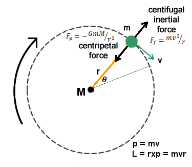 Curvilinear Motions in Newtonian Mechanics and Quantum Spin