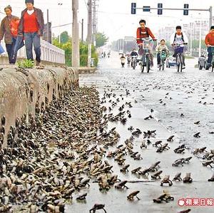 https://i0.wp.com/universitam.com/academicos/wp-content/uploads/2010/05/terremoto_rana_china.jpg
