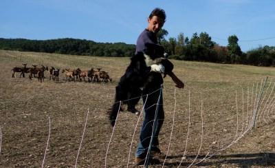 universite-avenir-agro-environnement-chevres-chien