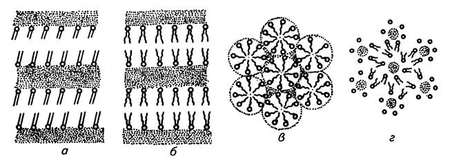 Структура липидных агрегатов