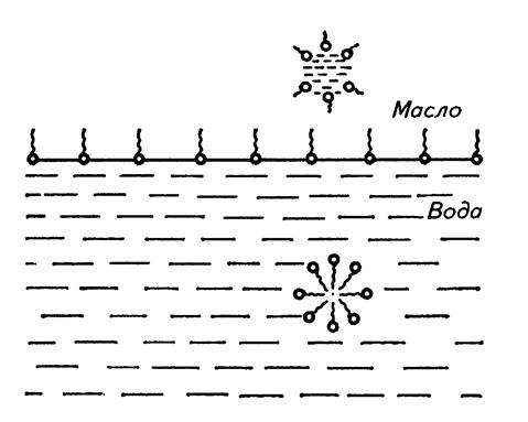 Мономолекулрный слой липидов