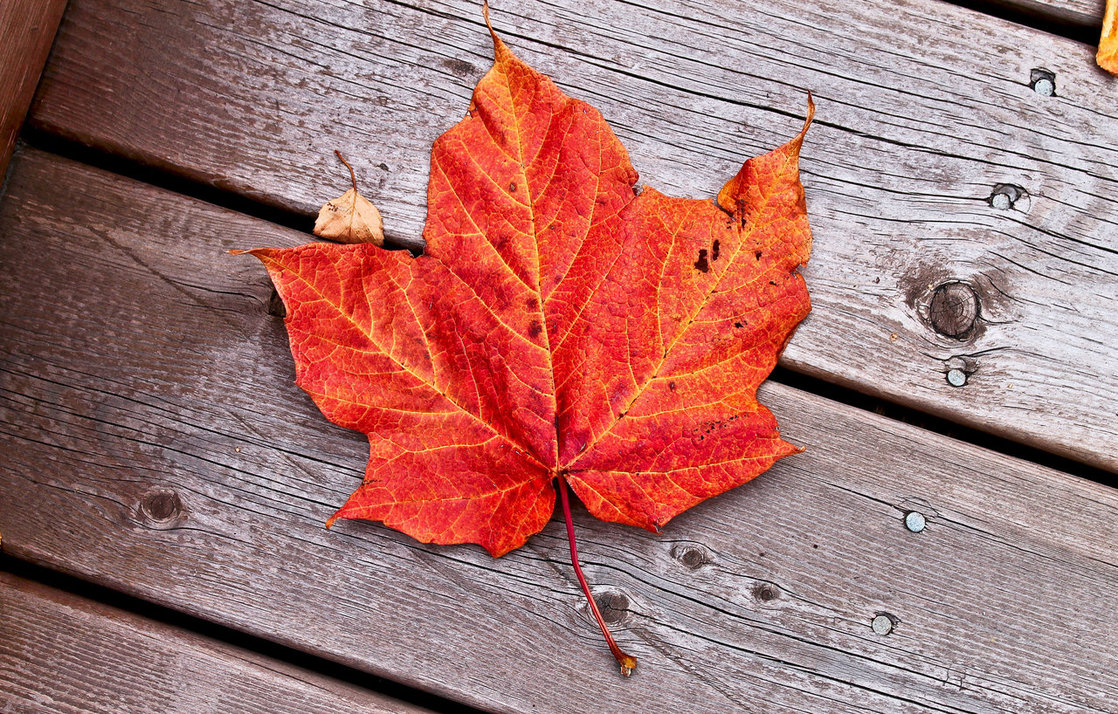 Fall Heart Leaves Background Wallpaper The Maple Leaf