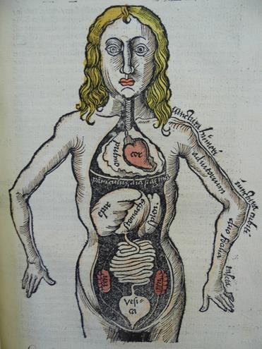 Figure of a man with his internal organs exposed