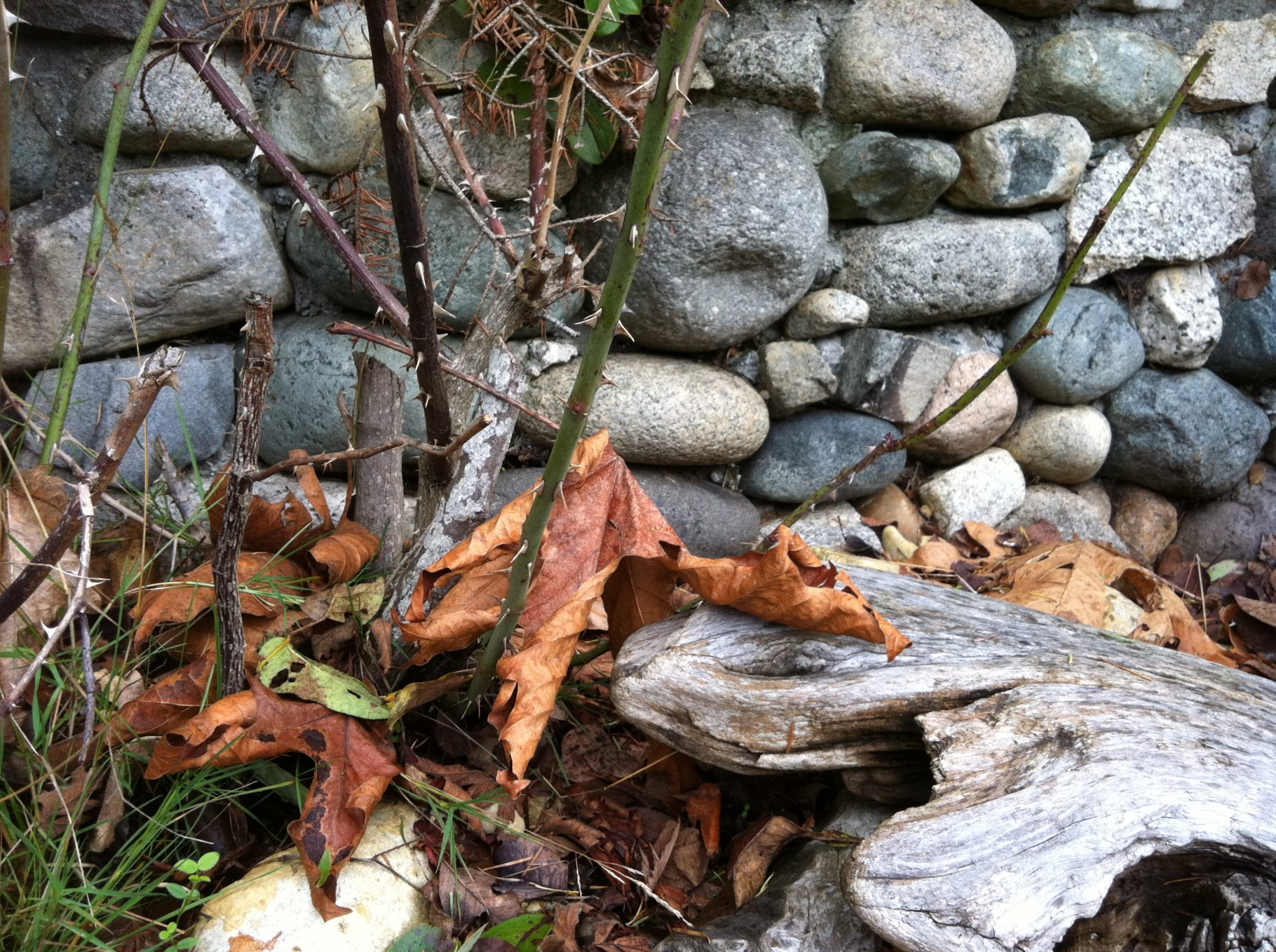 brown leaf and rock wall