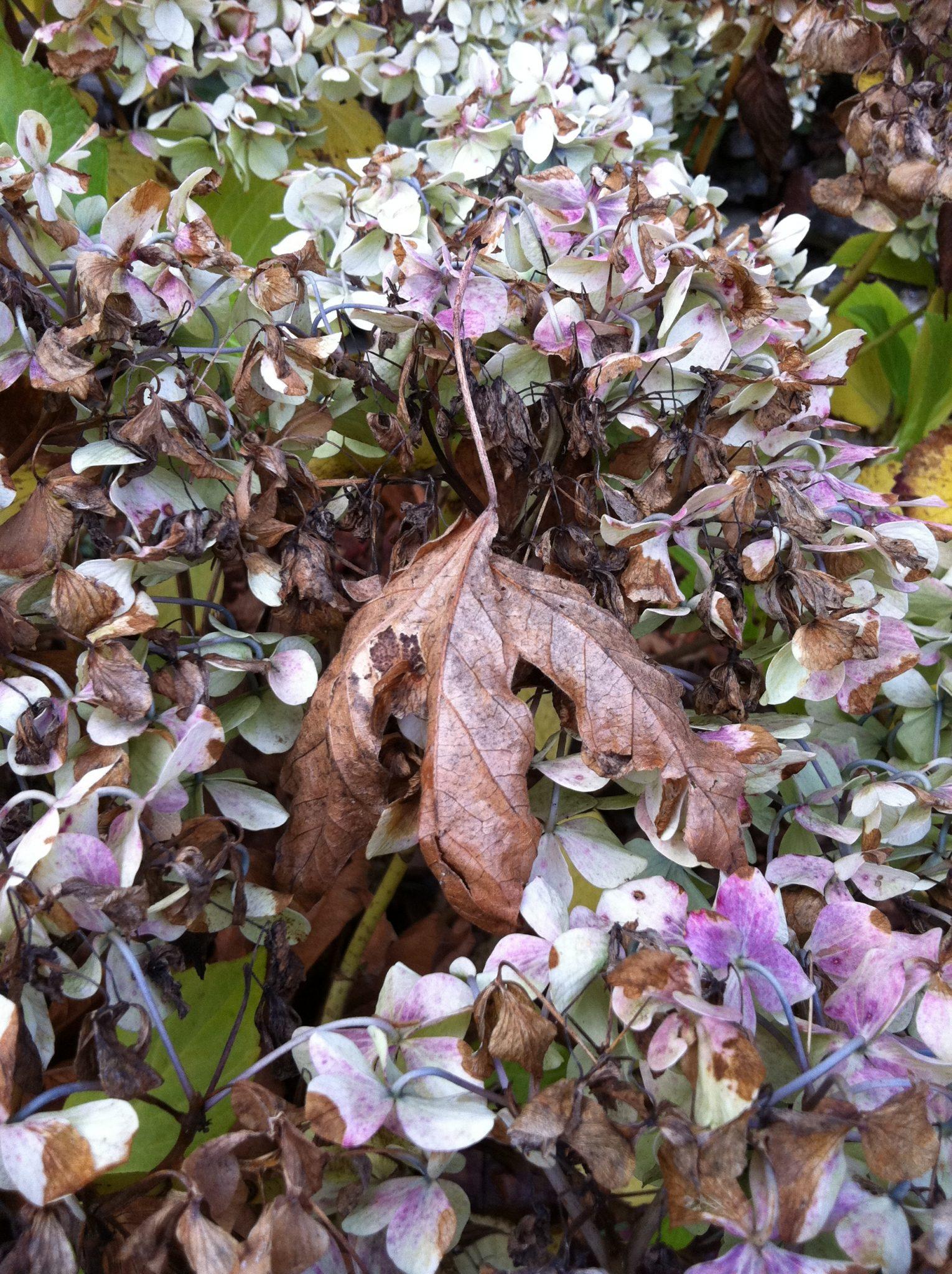 brown leaf on bush