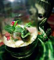 mini ecosistema