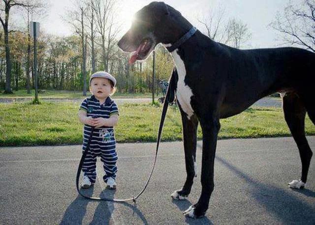 bimbo e cane alano