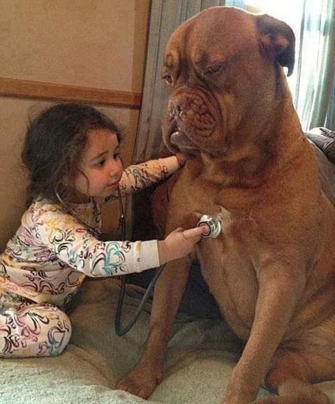 bambina ausculta cuore cane