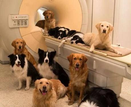 cani in laboratorio