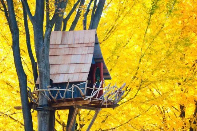 favolosa casa sull albero giappone