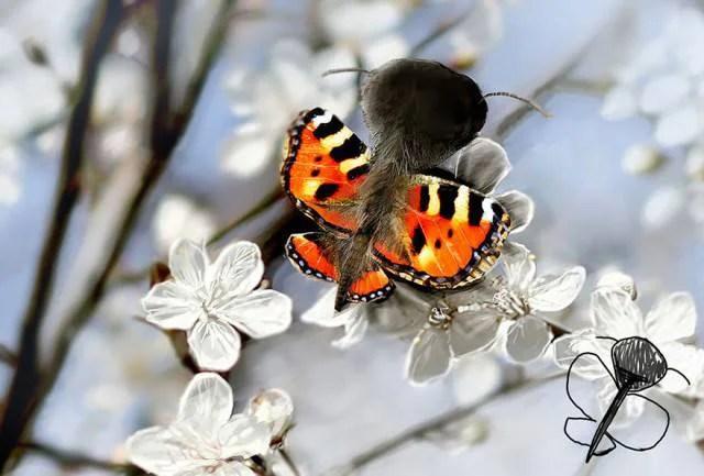 farfalla rossa disegno