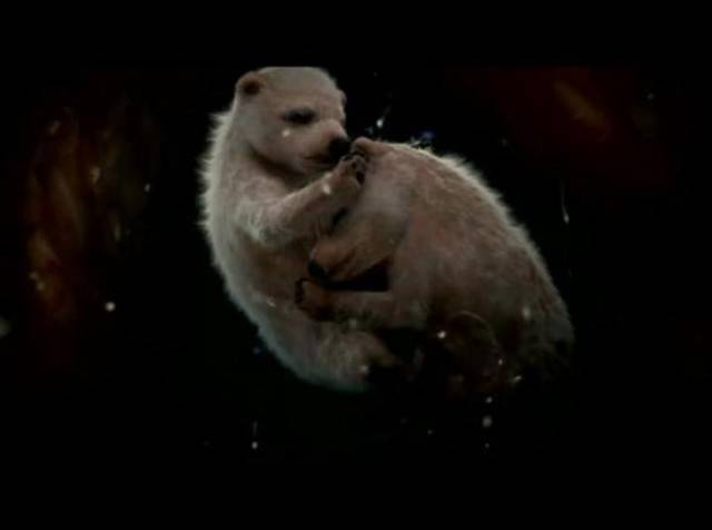 feti orso polare
