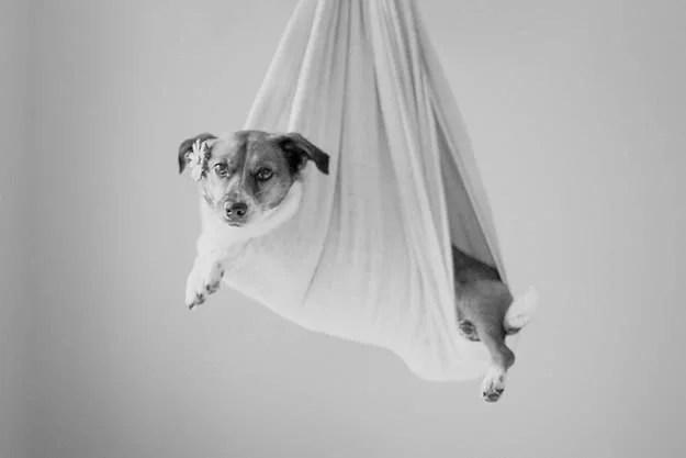 cane avvolto in un lenzuolo bianco come cicogna