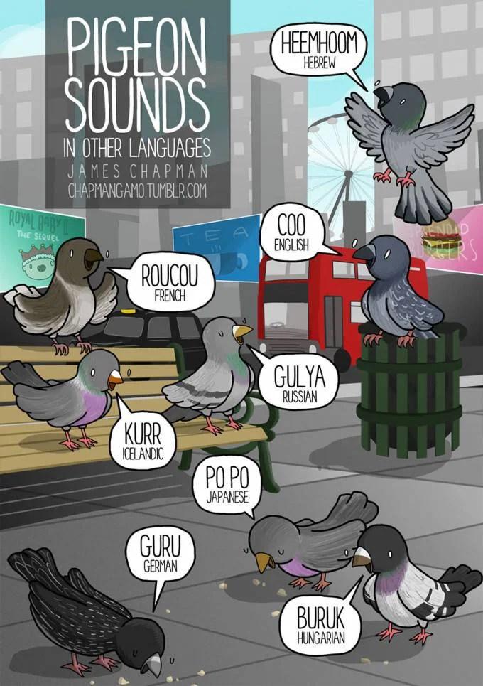 uccelli vignetta