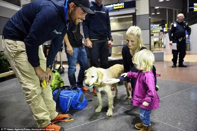 cane randagio in aereoporto