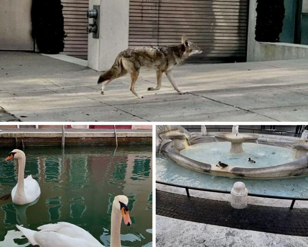 animales recuperando su espacio durante el confinamiento