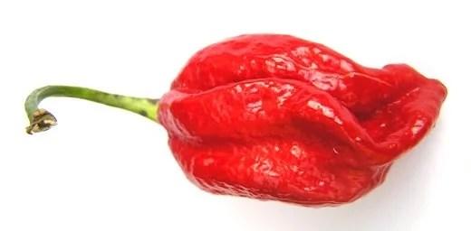 naga - Picante Veneno: As Pimentas Mais Ardidas