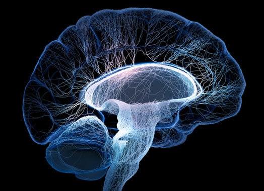 cerebro dibujado con los nervios interconectados