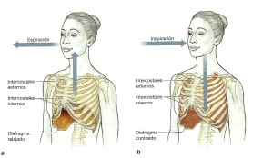 proceso respiratorio