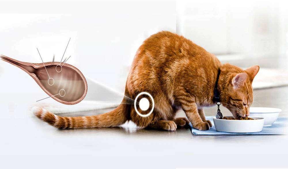 Лечение цистита у кошки фурагином