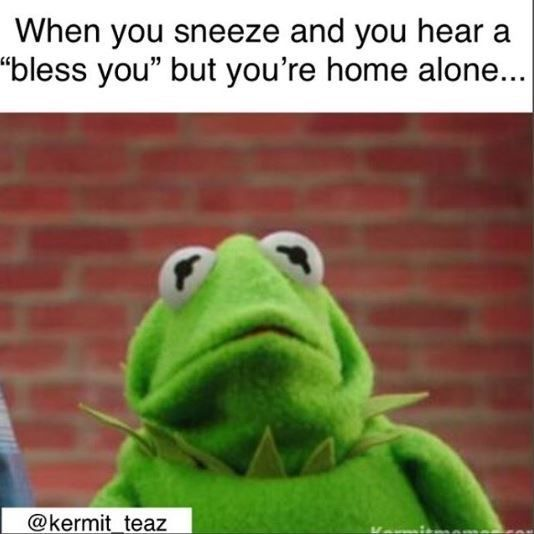 Kermit the Frog: 14 Funny Memes