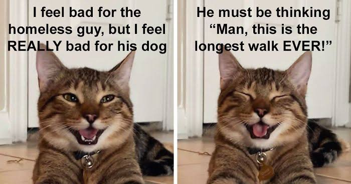 Happy National Cat Day, Oct 29. Funny cat memes 2020 and funny cat pictures