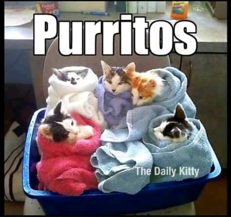 Purrfectly Funny cat memes 2020