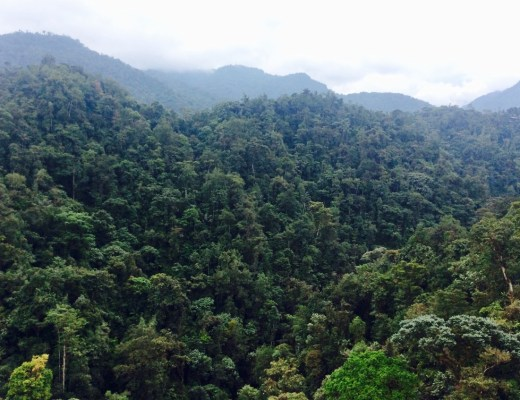 View of Mindo Cloud Forest