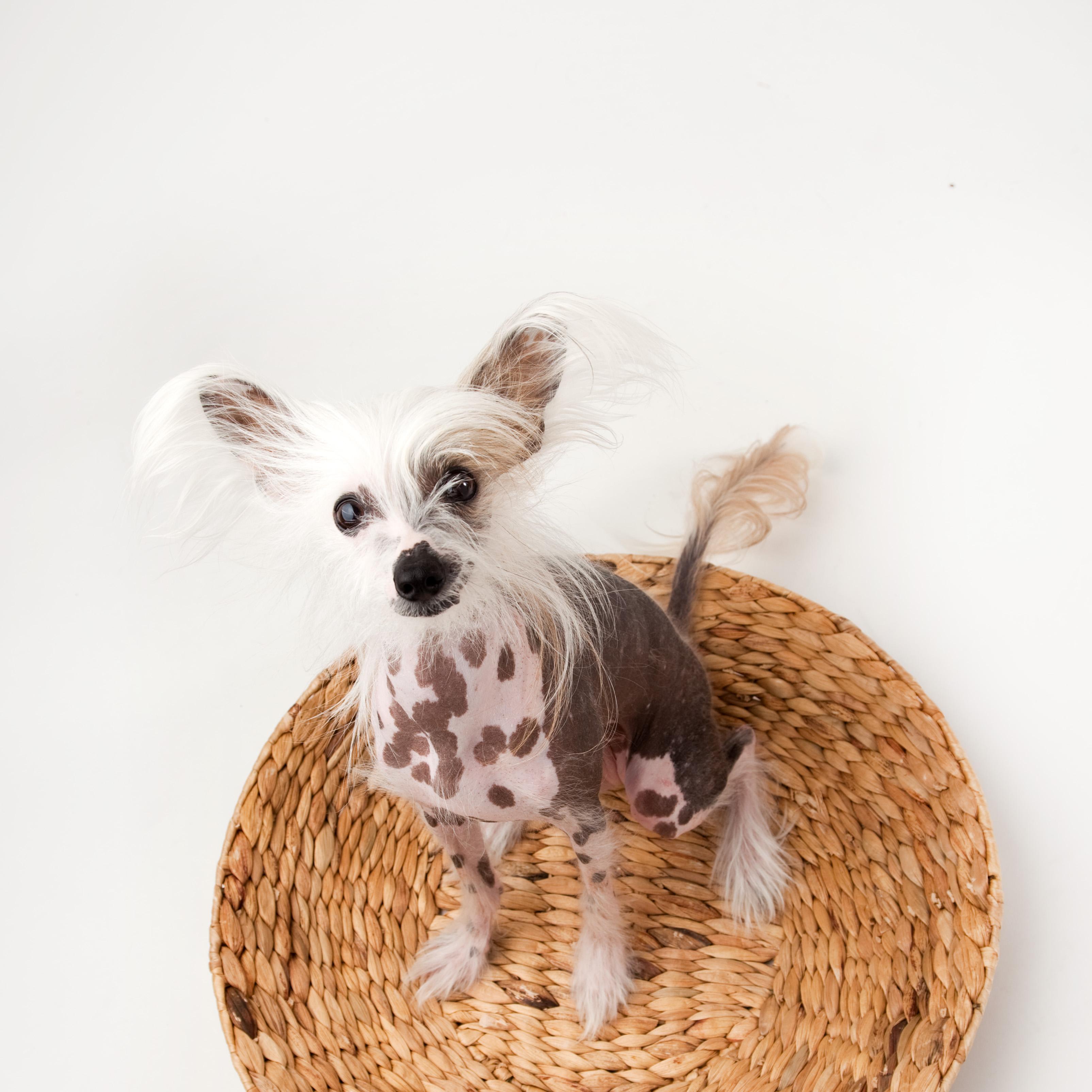 Teresa Berg Unleashed pet photography workshops