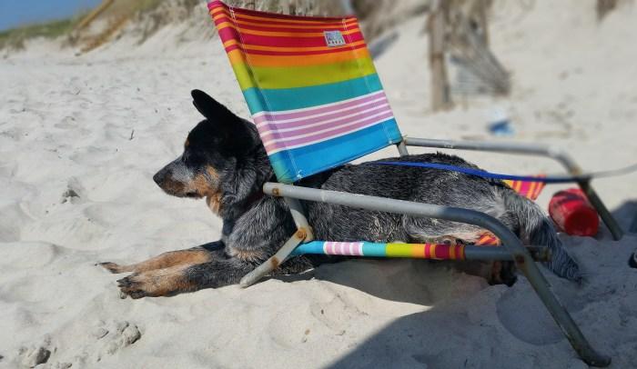 She loved the beach!