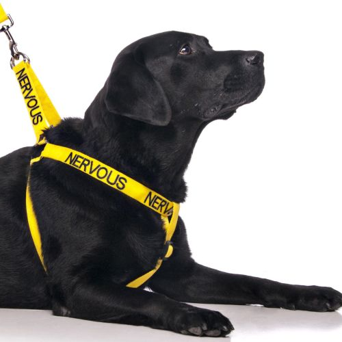 nervous dog strap harness