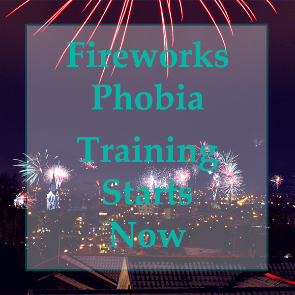 Fireworks Phobia – Training Starts Now!!