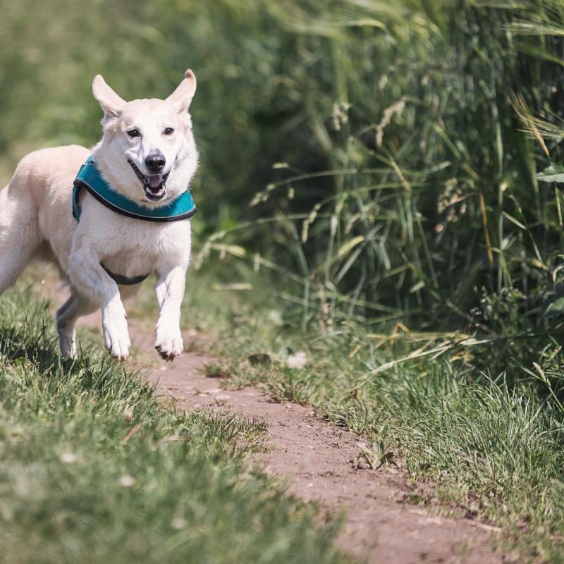 Generalising your dog training