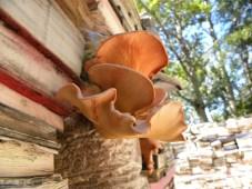 jardin-de-la-connaissance-leadc2a9a-r-mongeon