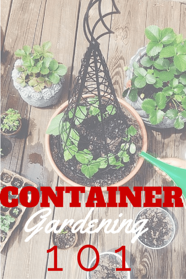 Container Outback(1)